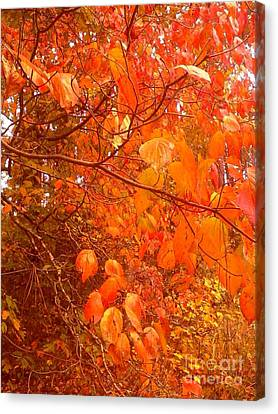 Ablaze Canvas Print by Elizabeth Carr