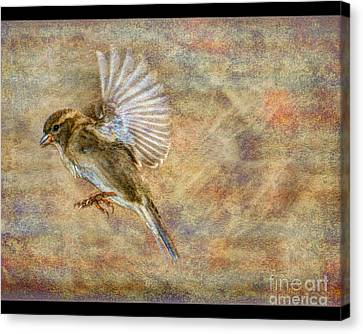 About To Land Canvas Print by Jim Wright