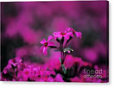 Above The Crowd Canvas Print by Lois Bryan
