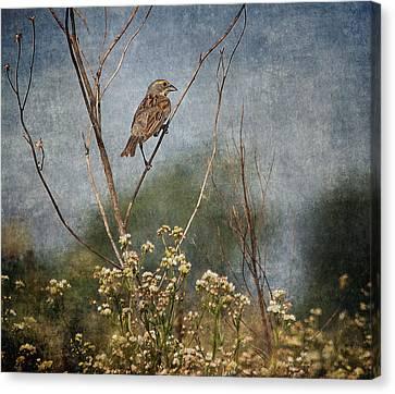 Above The Prairie Canvas Print by Dale Kincaid