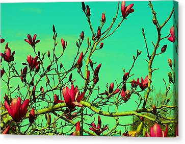 Above The Tree Canvas Print
