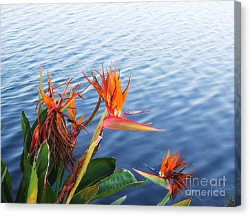 Absolutely Wonderful In Every Way Canvas Print by E Luiza Picciano