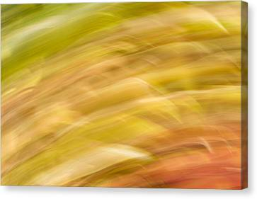 Abstract 15 Canvas Print