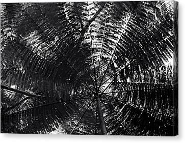 Abstract Canvas Print by Amarildo Correa