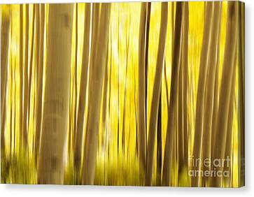 Abstract Aspens Canvas Print by Juli Scalzi