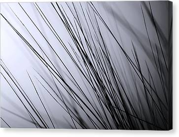 Abstract Black And White Canvas Print by Sabina  Horvat