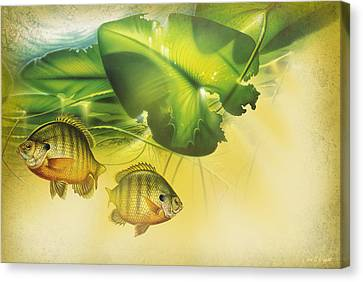 Abstract Blugill Canvas Print