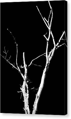 Abstract Branches Canvas Print