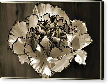 Abstract Carnation Canvas Print by Terence Davis