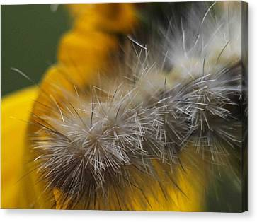 Abstract Caterpillar Canvas Print by Monica Veraguth
