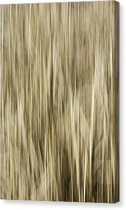 Abstract Cattails Canvas Print by Thomas Young