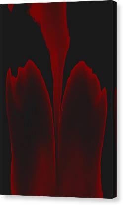 Abstract In Bloom 3 Canvas Print