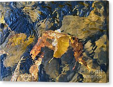 Abstract Leaves In Water Canvas Print by Dan Friend