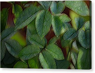Abstract Leaves Canvas Print by Ronald T Williams