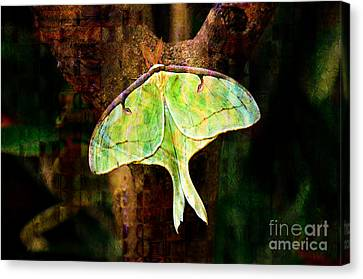 Abstract Luna Moth Painterly Canvas Print