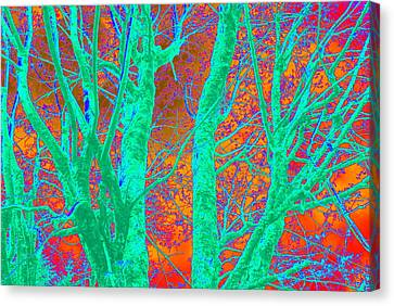 Abstract Maplei Canvas Print by Kathy Sampson