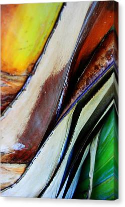 Canvas Print featuring the photograph Abstract Palm 3 by Heather Green