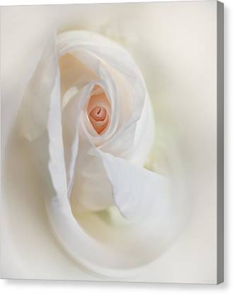 Abstract Pastel Rose Flower Canvas Print by Jennie Marie Schell