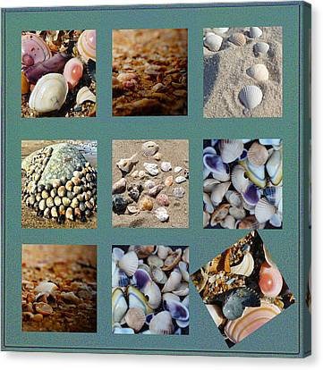 Abstract Seashells Canvas Print by Celestial Images