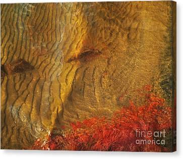 Abstract Shore 2 Canvas Print