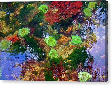 Abstract Tidal Pool Canvas Print