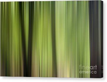 Abstract Trees In The Forest Canvas Print by Natalie Kinnear