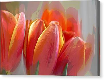 Abstract Tulips Canvas Print by Mariola Szeliga