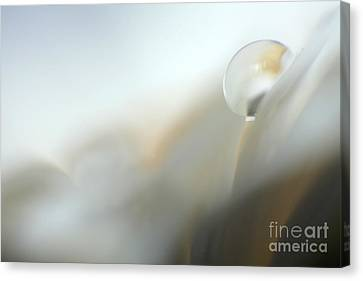 Abstract White Germini Canvas Print by Eden Baed