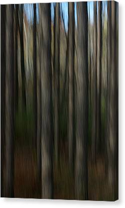 Canvas Print featuring the photograph Abstract Woods by Randy Pollard