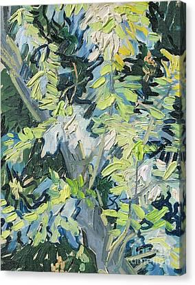 Acacia In Flower Canvas Print