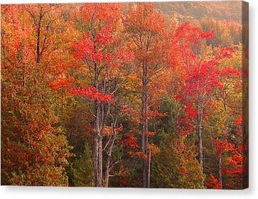 Maine Fall Colors Canvas Print