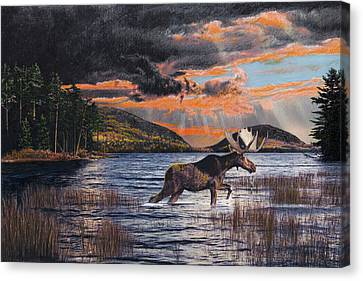 Acadia Feast Canvas Print by Brent Ander