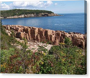 Acadia Maine Canvas Print by Catherine Gagne