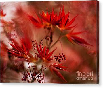 Acer Storm Canvas Print by Mike Reid