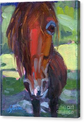 Forelock Canvas Print - Ace's Face by Sylvina Rollins