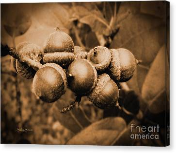 Acorn 2 Canvas Print by Sally Simon