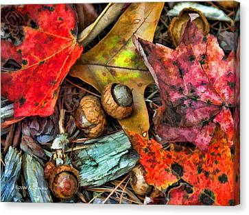 Acorns And Leaves Canvas Print by Kenny Francis
