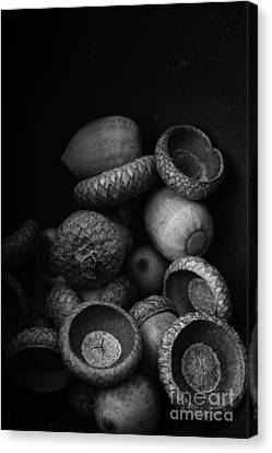 Wooden Bowls Canvas Print - Acorns Black And White by Edward Fielding