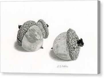 Leaves Canvas Print - Acorns- Black And White by Sarah Batalka