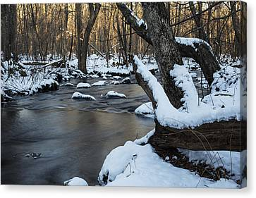 Adamsville Brook Canvas Print by Andrew Pacheco