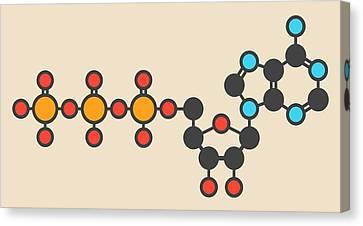 Adenosine Triphosphate Molecule Canvas Print by Molekuul