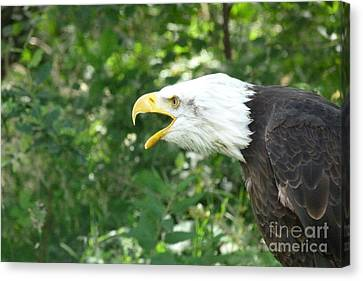 Canvas Print featuring the photograph Adler Raptor Bald Eagle Bird Of Prey Bird by Paul Fearn