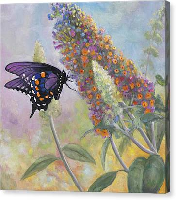 Admiral Butterfly Canvas Print by John Zaccheo