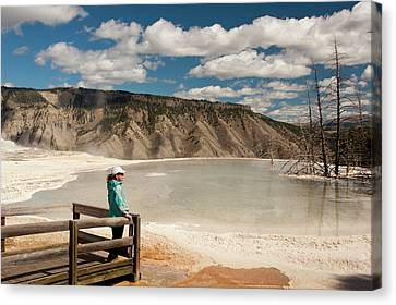 Admiring Canary Springs, Mammoth Canvas Print by Howie Garber