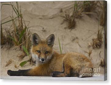 Adorable Baby Fox Canvas Print by Amazing Jules