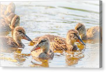 Adorable Brood Canvas Print by Optical Playground By MP Ray