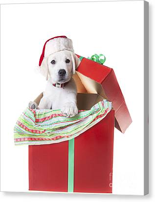 Adorable Christmas Puppy  Canvas Print by Diane Diederich