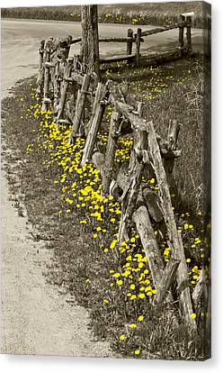 Adorned Split-rail Canvas Print
