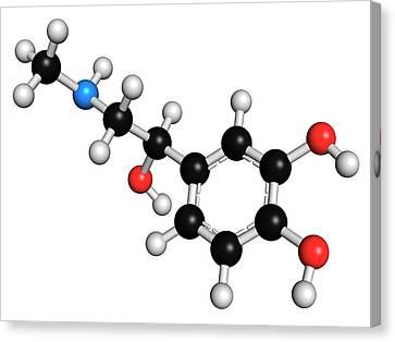 Adrenaline Neurotransmitter Molecule Canvas Print by Molekuul