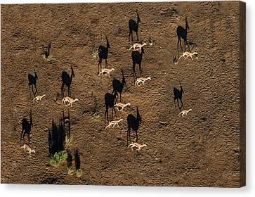 Aerial View Of Deer, Sossusvlei, Namib Canvas Print by Panoramic Images